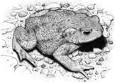 Photograph - American Toad by Roger Hall
