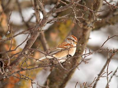 Photograph - American Tree Sparrow by J McCombie