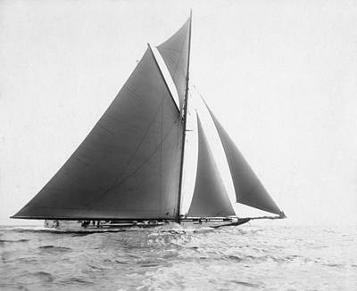 America's Cup, 1901 Print by Granger