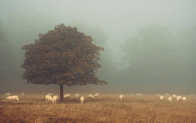 Trust Photograph - Amongst The Flock On An Autumn Morning by Chris Fletcher