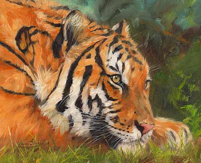 Paws Painting - Amur Tiger by David Stribbling
