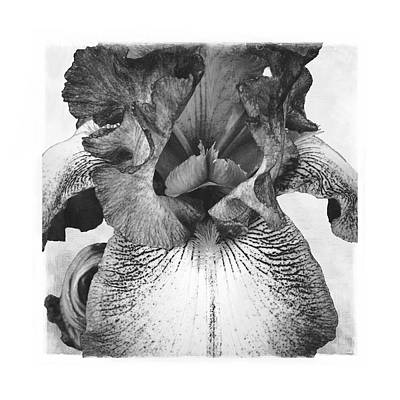 Digital Manipulation Drawing - An Emperor Iris Etching by AGeekonaBike Photography