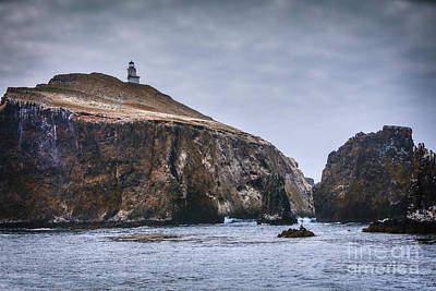 Photograph - Anacapa Island Lighthouse by David Millenheft