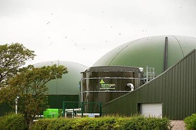 Swallow Photograph - Anaerobic Biodigesters by Ashley Cooper