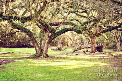 Ancient Oaks Art Print by Scott Pellegrin