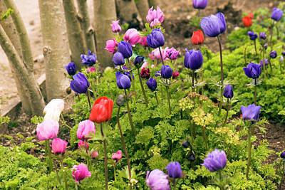 Caen Photograph - Anemone Coronaria Flowers by Adrian Thomas