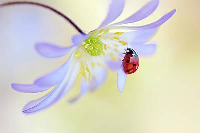 Lilac Photograph - Anemone Lady by Jacky Parker
