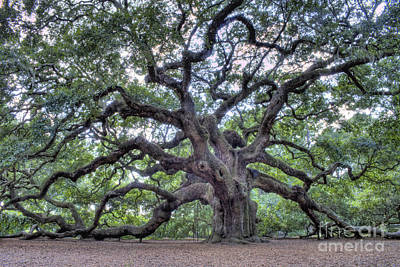 Oak Leaf Photograph - Angel Oak by Dustin K Ryan