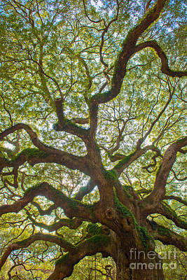 Photograph - Vibrant Angel Oak Tree by Dale Powell