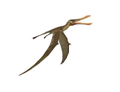 Anhanguera Pterosaur Art Print by Friedrich Saurer