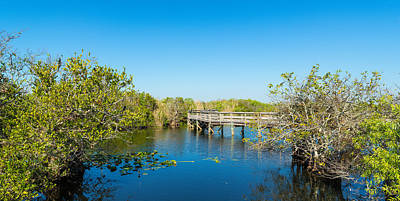 Anhinga Photograph - Anhinga Trail Boardwalk, Everglades by Panoramic Images