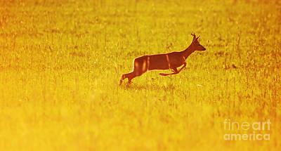 Run Photograph - Animal Background. Roe-deer by Michal Bednarek