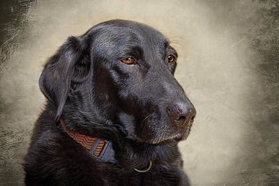 Photograph - animals - dogs - Black Lab by Ann Powell
