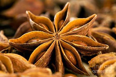 Aniseed Photograph - Anise Star by Iris Richardson