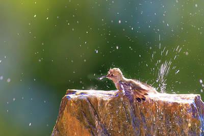 Annas Hummingbirds Wall Art - Photograph - Anna's Hummingbird Taking A Shower by Tom Norring
