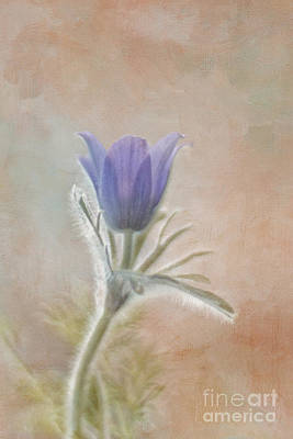 Flower Photograph - Announcing Spring by Maria Ismanah Schulze-Vorberg