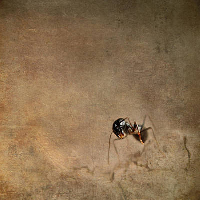 Ant Mixed Media - ant by Heike Hultsch