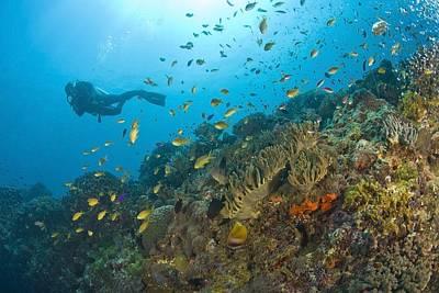 Animals Photos - Apo Island Marine Park, Negros Oriental by Stuart Westmorland
