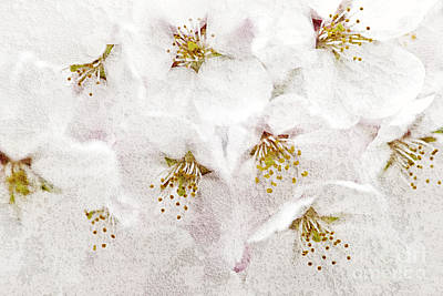 Apple Blossoms Print by Elena Elisseeva