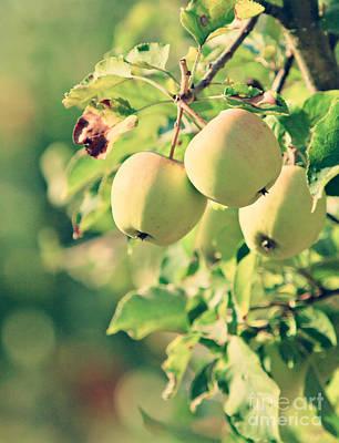 Western Art - Apple Branch by Dan Radi