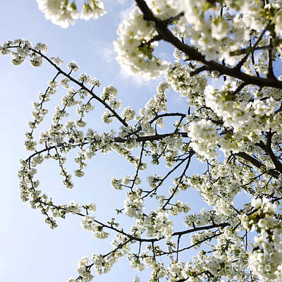 Spring Branch Photograph - Apple Tree by Bernard Jaubert