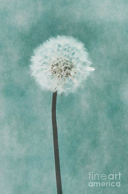 Photograph - Aqua Dandelion by Jim And Emily Bush
