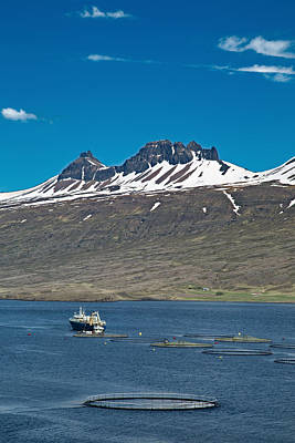 Icelandic Fish Photograph - Aquaculture Salmon Farm by Dirk Ercken