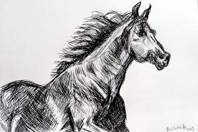 Beasts Drawing - Arabian Horse by Paul Sutcliffe