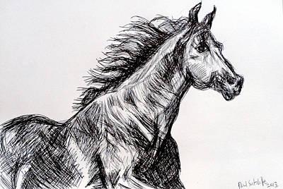 Animals Drawings - Arabian Horse by Paul Sutcliffe