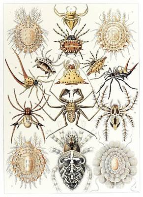 Arachnid Organisms, Artwork Art Print by Mehau Kulyk