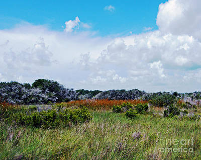 Photograph - Aransas Nwr Texas by Lizi Beard-Ward