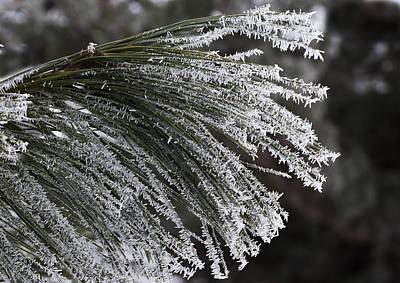 Photograph - Arboretum Hoar Frost by Steven Ralser