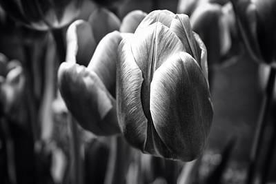 Arboretum Tulips Art Print