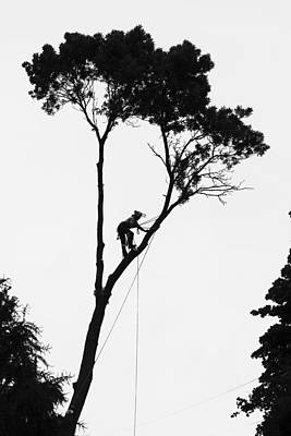 Photograph - Arborist At Work by Steven Ralser