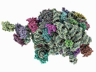 Archaeon Ribosome Subunit Art Print