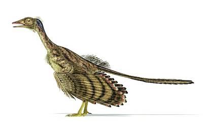 Prehistorical Photograph - Archaeopteryx Dinosaur by Leonello Calvetti