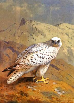 Eagle Cliff Painting - Greenland Falcon by Archibald Thorburn