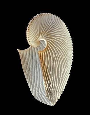 Argonaut Octopus Eggcase Shell Art Print by Gilles Mermet