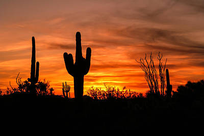Arizona Saguaro Cactus Sunset Print by Michael J Bauer