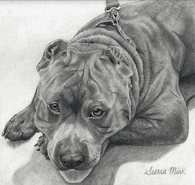 Pitbull Drawing - Arnold  by Sierra Mink
