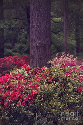 Dreamy Pink Park Scene Photograph - Around A Tree by Svetlana Sewell