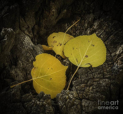Photograph - Aspen by David Waldrop
