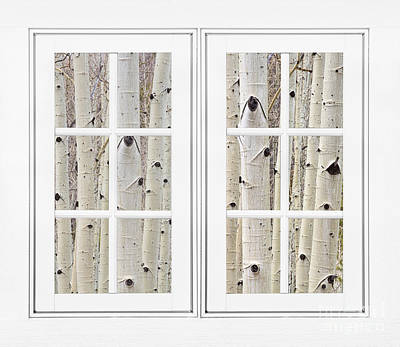 Photograph - Aspen Forest White Picture Window Frame View by James BO Insogna