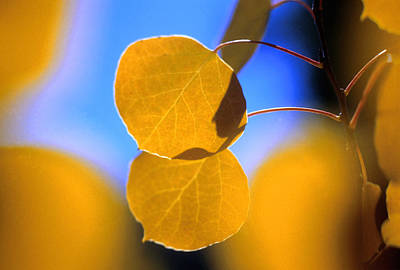 Colorado Photograph - Aspen Glow by Jerry McElroy