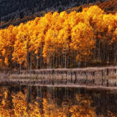 Jeff Johnson Photograph - Aspen Reflections by Jeff Johnson