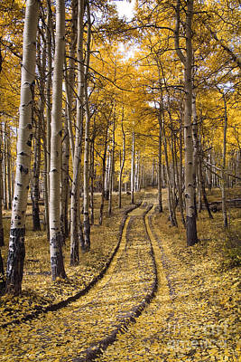 Old Country Roads Photograph - Aspen Road Co by Sean Bagshaw