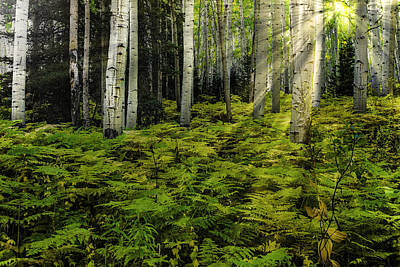 Photograph - Aspen Sunrise by Donald Brown