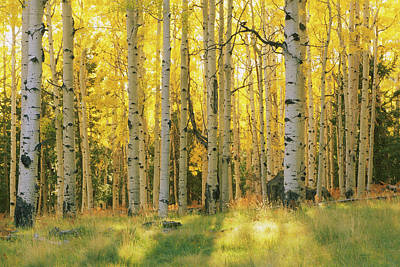 Photograph - Aspen Trees In A Forest, Coconino by Panoramic Images