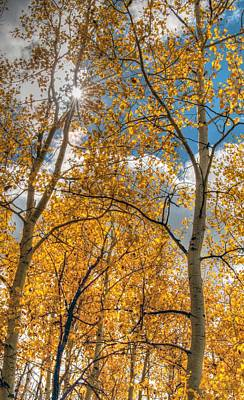 Photograph - Aspens by Tam Ryan