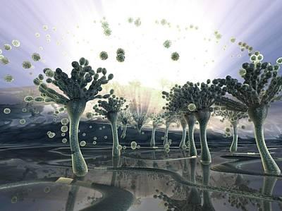 Aspergillus Fungus Art Print by Hipersynteza